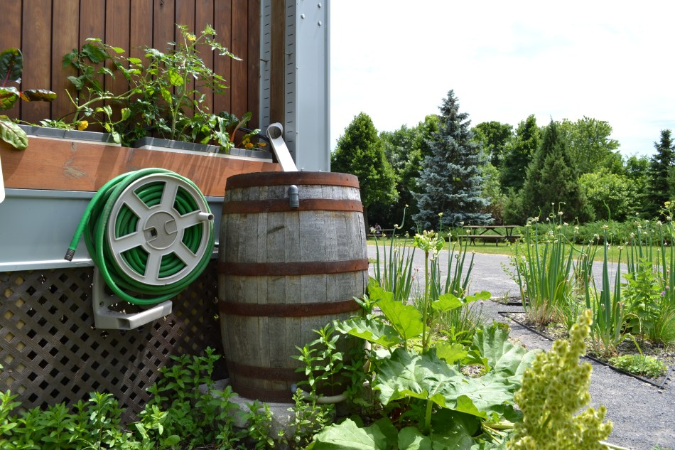 Rain barrel to collect mineral-free water.