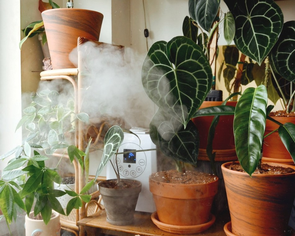 Humidifier releasing fog to reduce spider mites in houseplants.