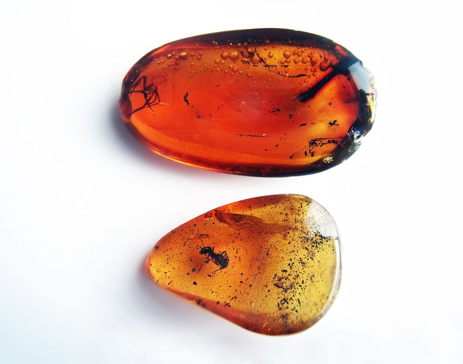 Pieces of amber with insects inside.