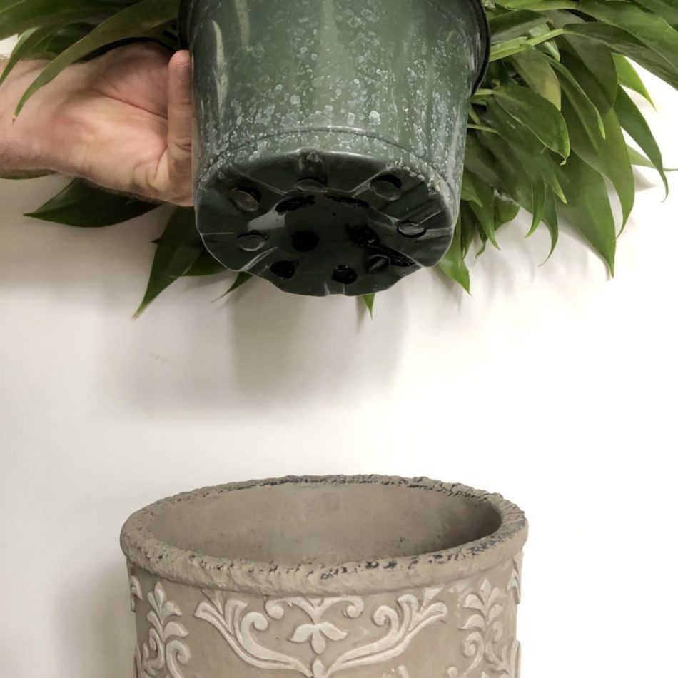 Pot being inserted into a cachepot