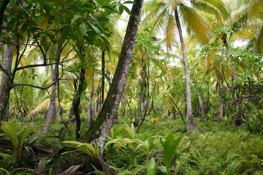Tropical forest with numerous seedlings covering the ground.