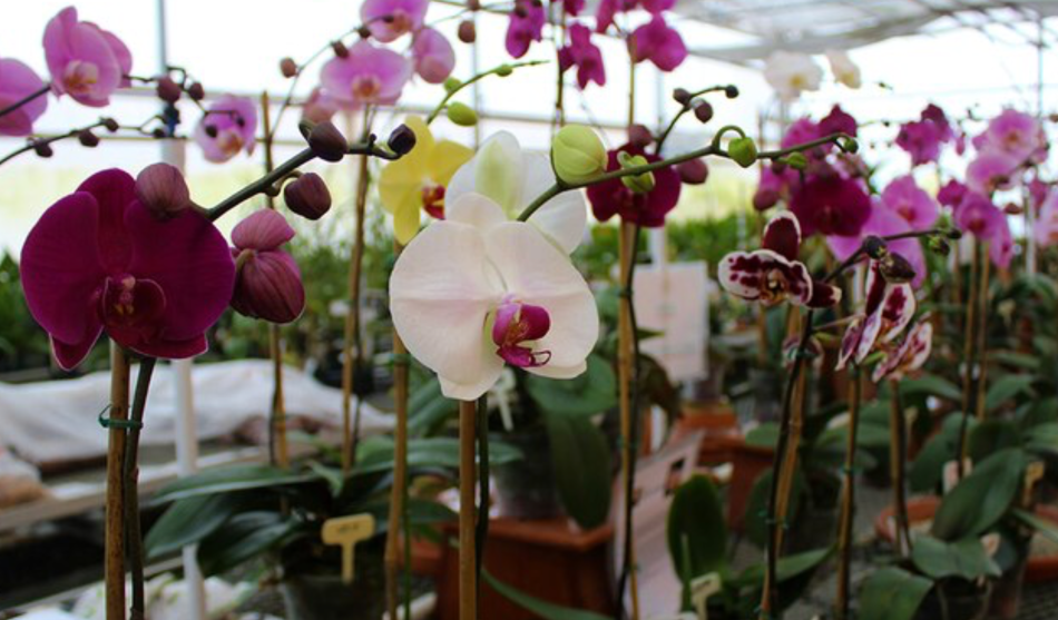 Sales area in a specialist orchid greenhouse