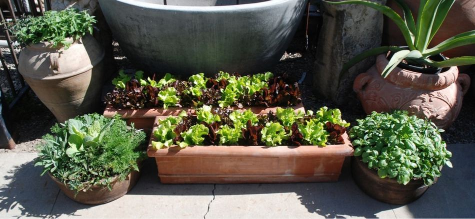Container gardens on a deck