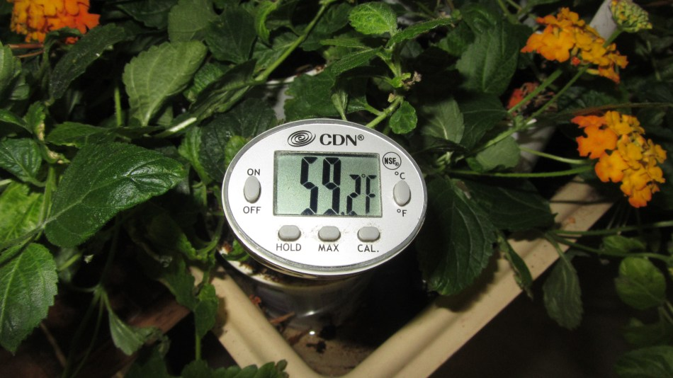 Meat thermometer testing soil temperature in the garden.