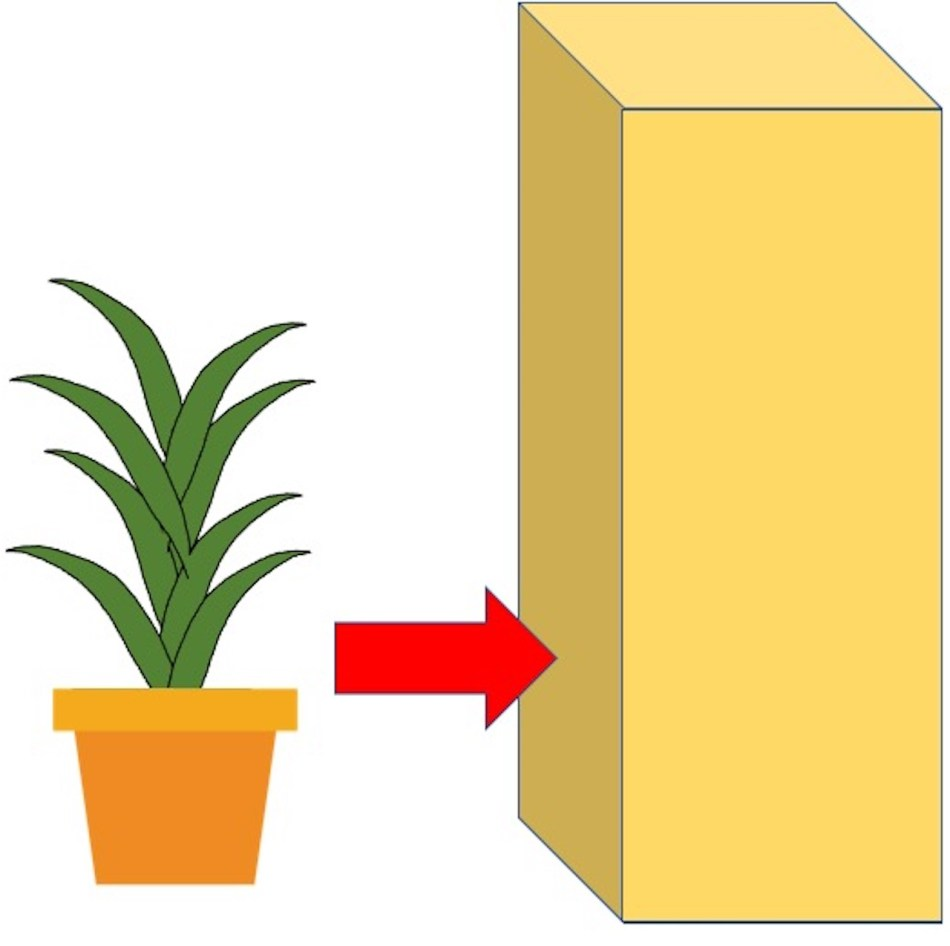 Drawing of lucky bamboo being put it a box.