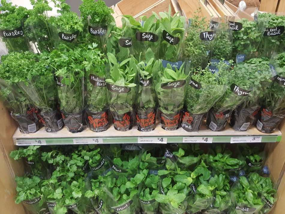 Supermarket display of mixed herb plants.