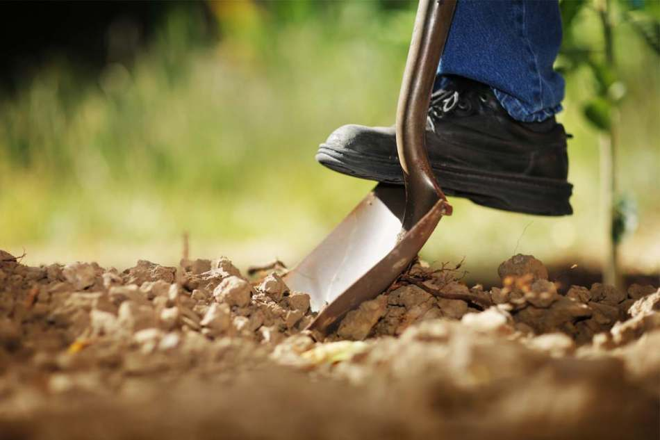 Digging with a shovel.