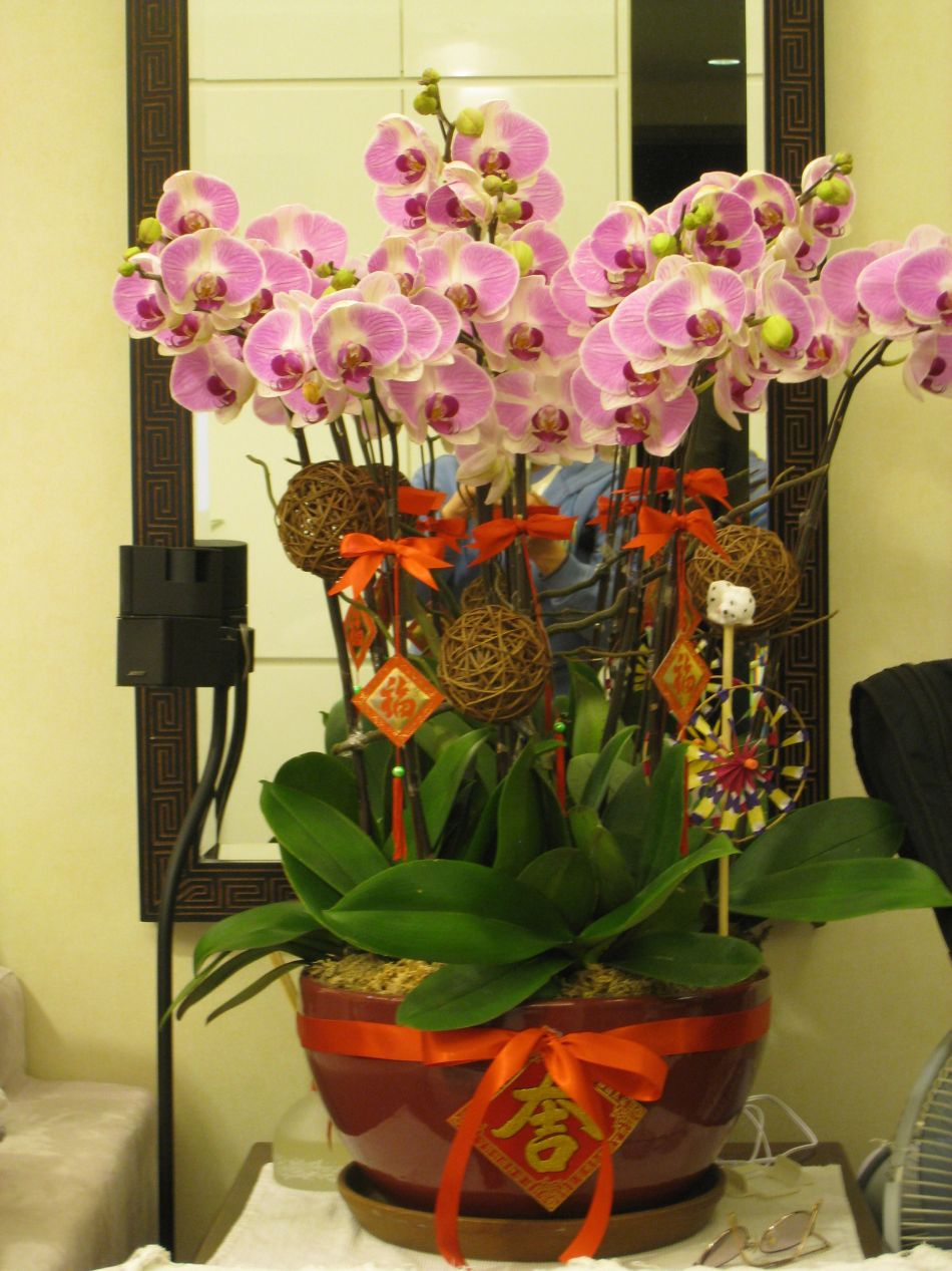 Phalaenopsis orchid with Chinese decorations.