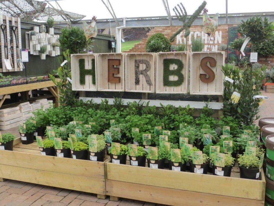 Herb display in garden center.