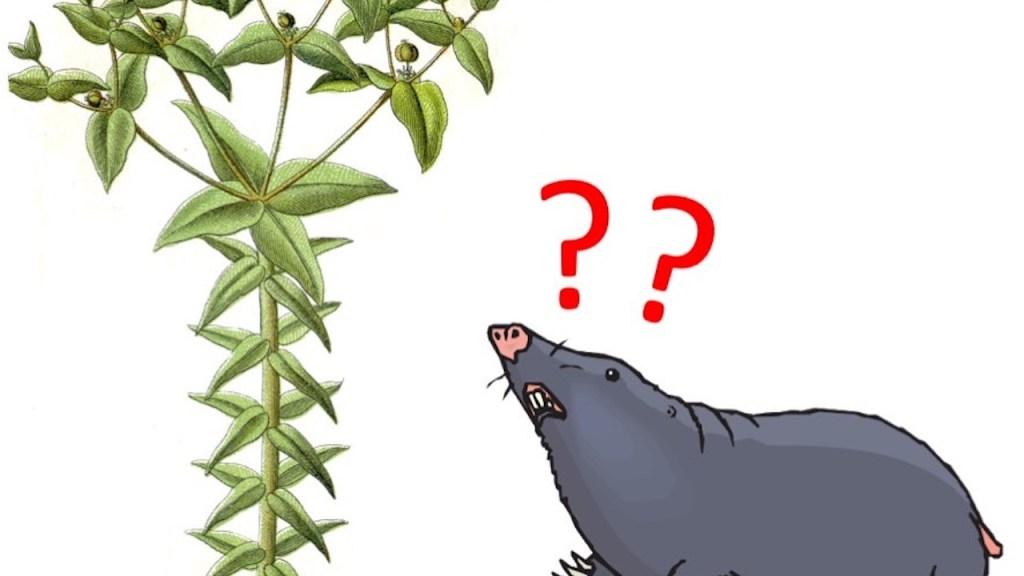 Illustration of mole doubtfully examining a mole plant.