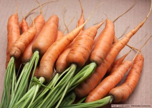 Harvested cleaned carrots with tops.