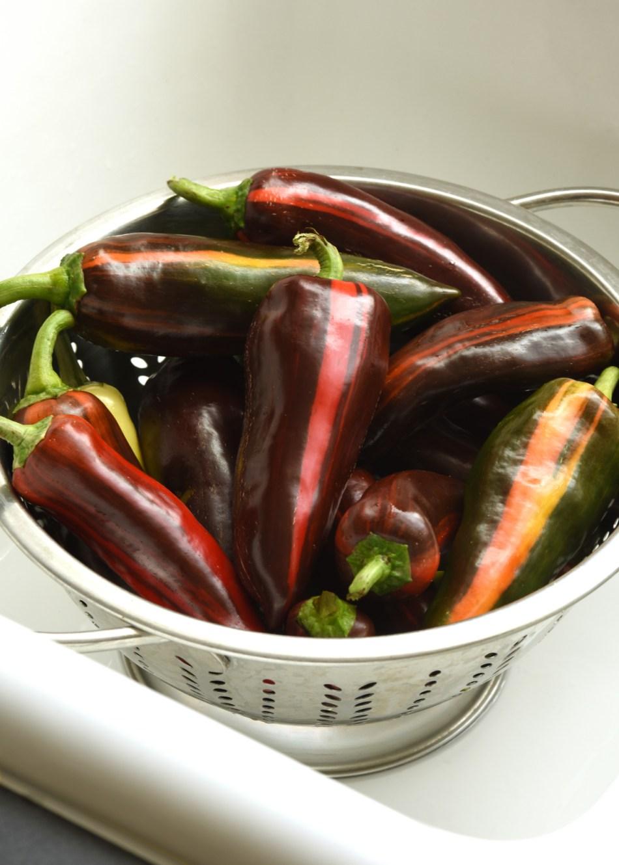 Mocha Swirl peppers in a colander.