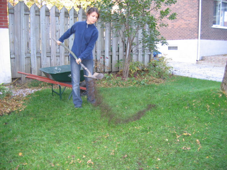 Broadcasting compost as top-dressing over a lawn.