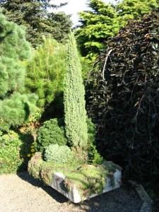 Hypertufa trough garden with miniature conifers.