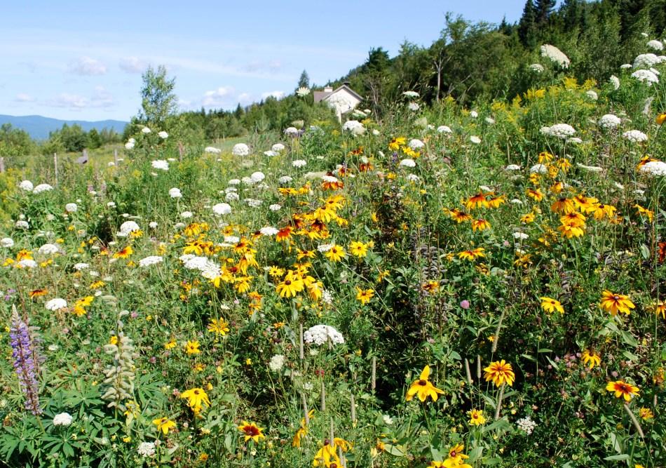 Perennial Wildflower Meadow