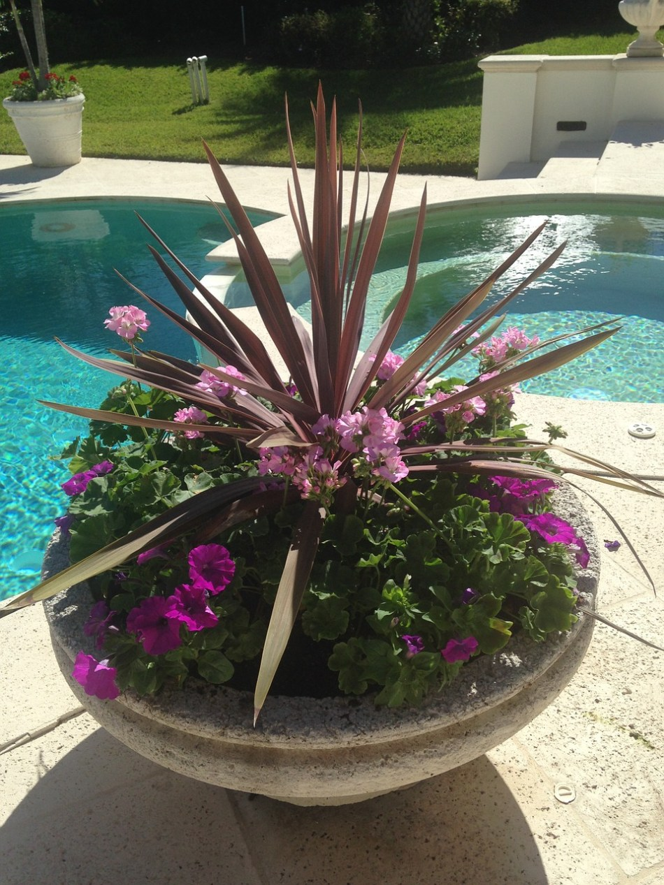 Tropical-looking planter near a swimming pool.