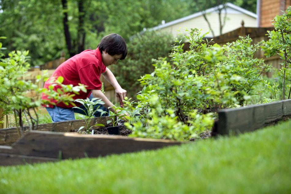 Boy planting in vegetable garden.