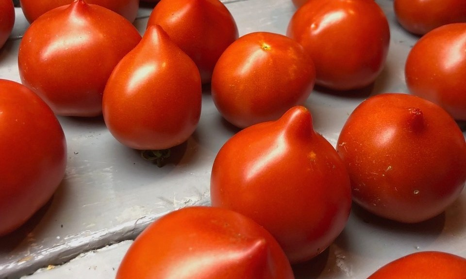 Red tomatoes with a nipple.