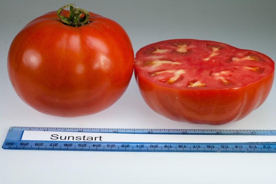 Sunstart tomato