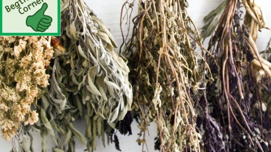 Dried herbs hanging from a cieling.