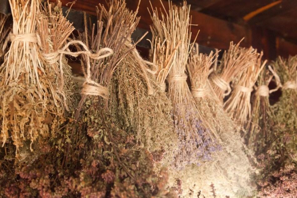 Fines herbes séchées suspendues au plafond.