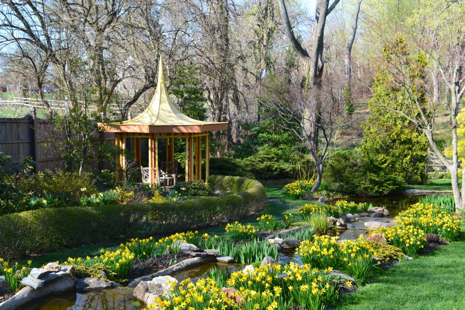 The Yellow Garden with daffodils.