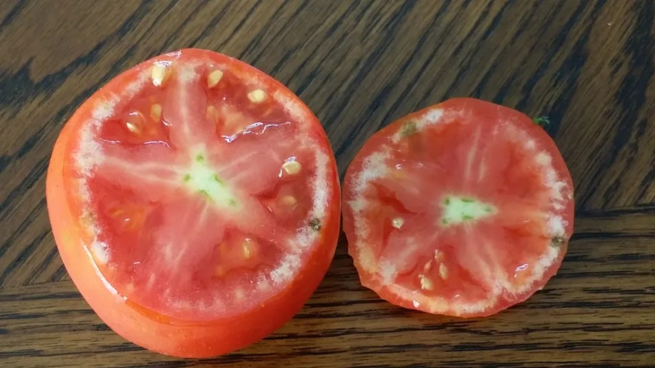 Tomato cut to show hard, white sections under the skin.