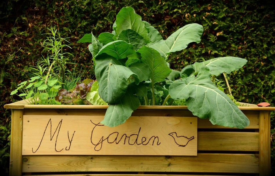 """Raised bed with sign saying """"My Garden""""."""