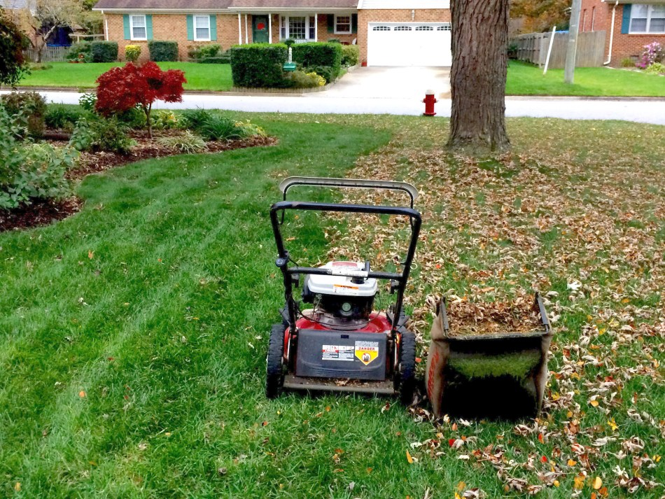 Lawn mower shredding and collecting leaves on a lawn.