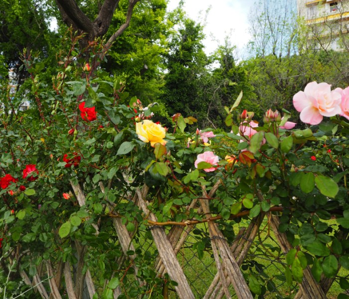Cervantes Park – Barcelona's secret rose garden