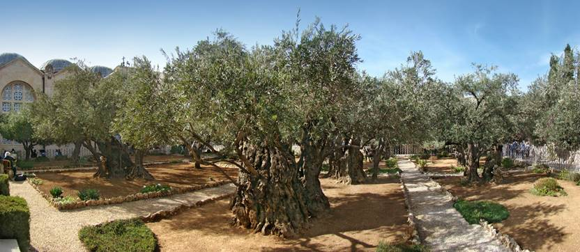 Gethsemane is an urban garden at the foot of the Mount of Olives in Jerusalem. In Christianity, it is the place where Jesus underwent the agony in the garden and was arrested the night before his crucifixion.