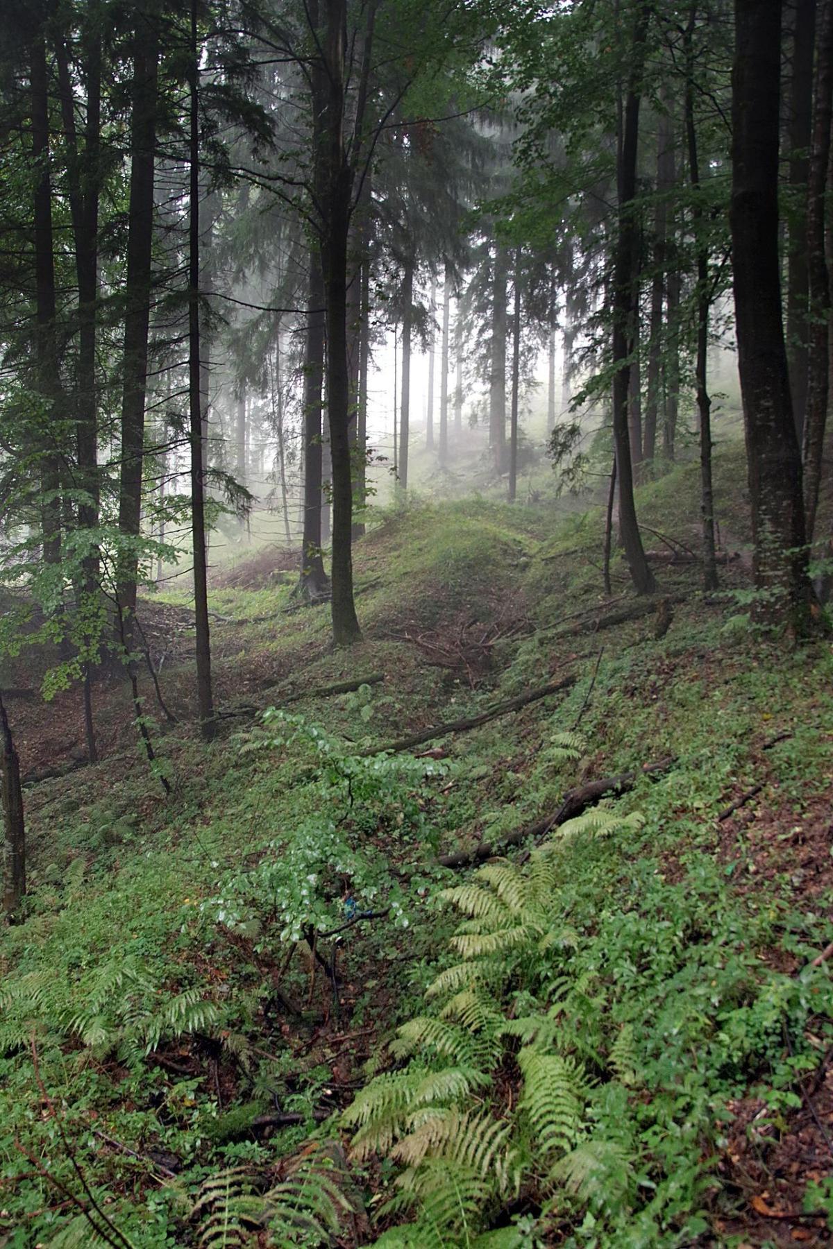 foto bosque niebla duda arbol verde poema