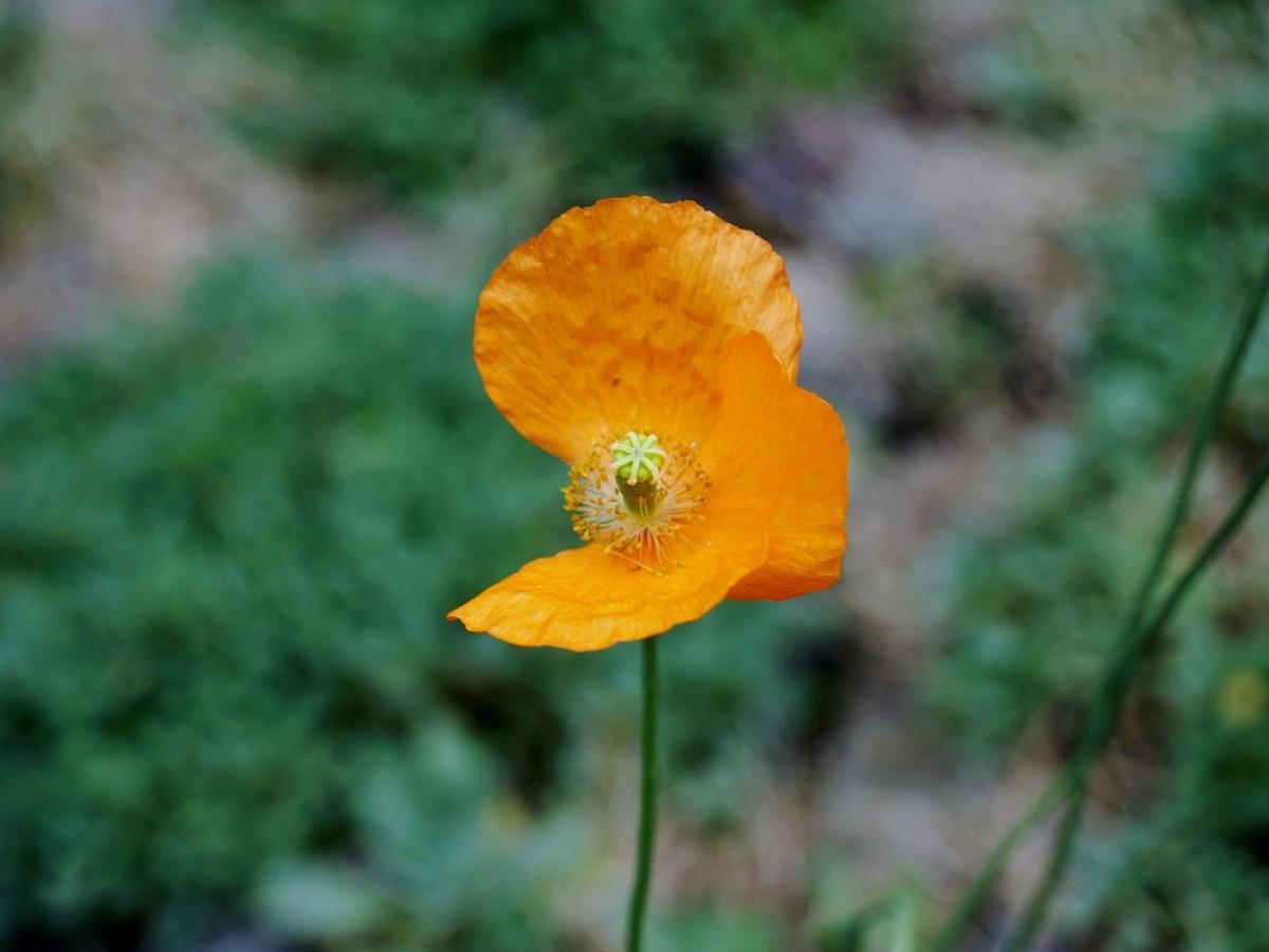 opinión flor