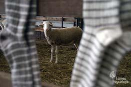 Laines Paysannes Boutique Chaussettes laine