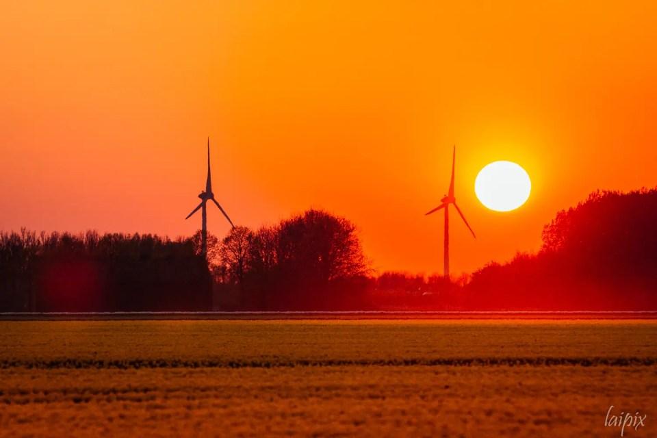 Sonnenuntergang über gelben Tulpenfeld mit Windräder