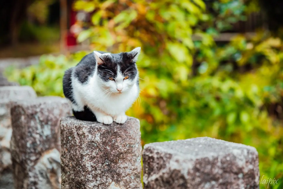 Fushimi Inari Katze Japan Kyoto draußen