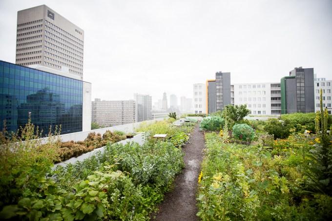 Rotterdam - op het dak