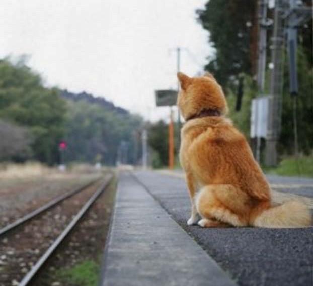 chien-loyal-jpg