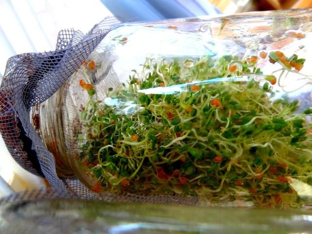 germination resultat