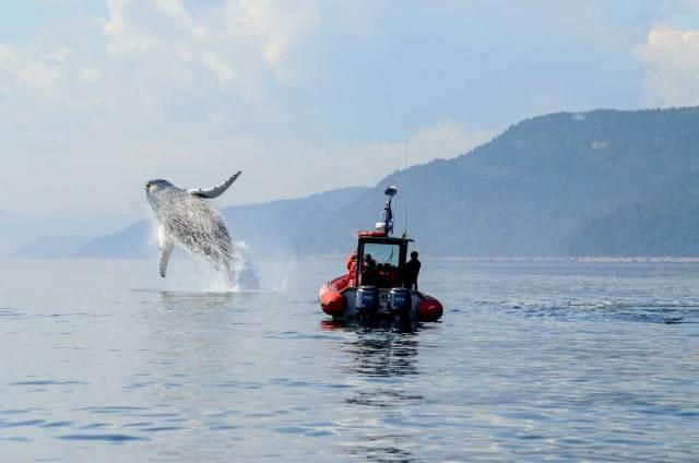 1-tadoussac-saut-baleines-bosse-fjord-saguenay