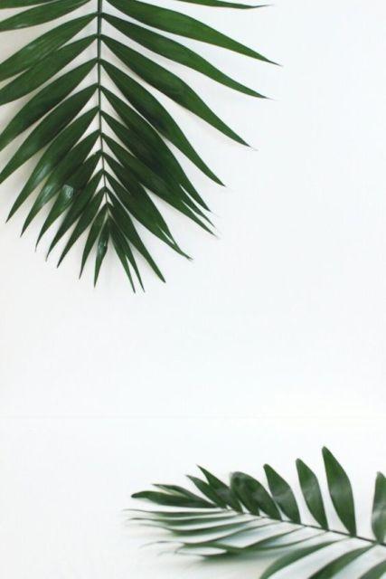 Minimalisme, feuilles vertes