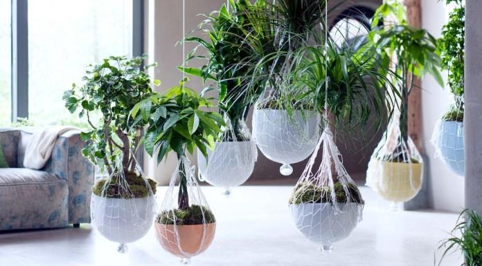 5 façon intégrer plantes dans décor