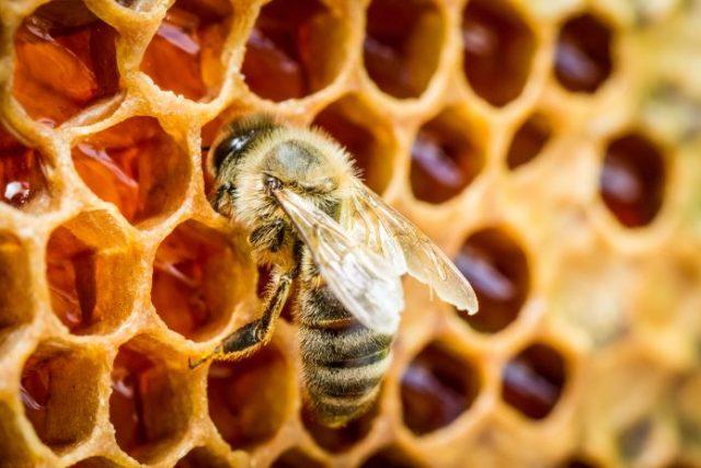 miel, abeille