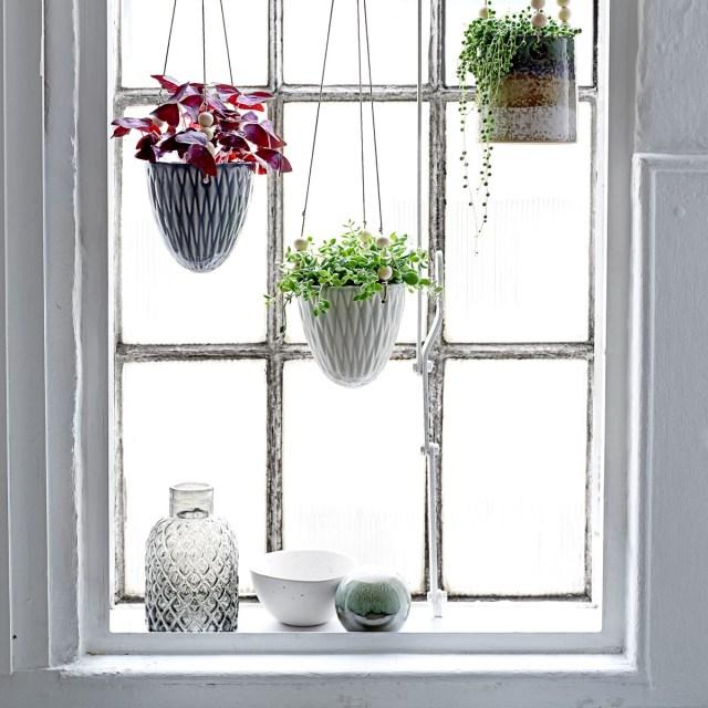 Déco scandinave, plantes