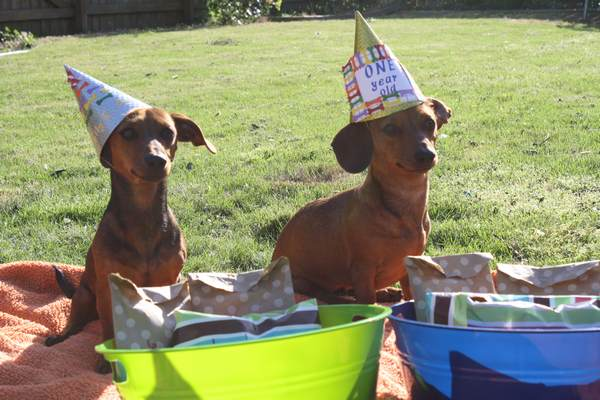 dog_birthday_party13