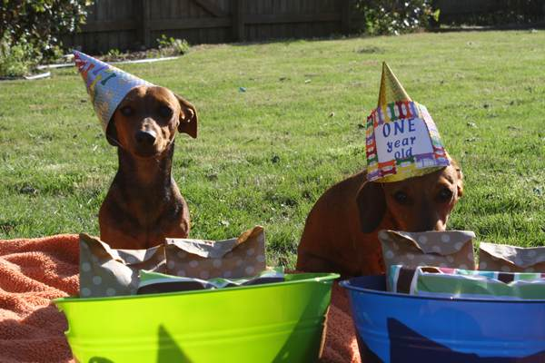 dog_birthday_party14
