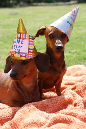 dog_birthday_party2