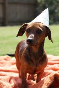 dog_birthday_party5
