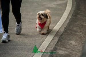 Panagbenga-2013-Dog-Parade