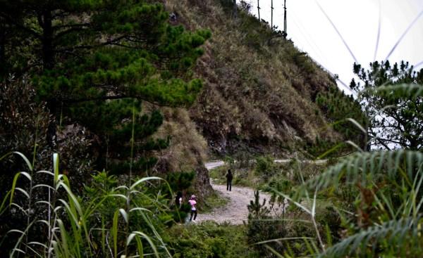 baguio-city-pine